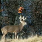 caza venado