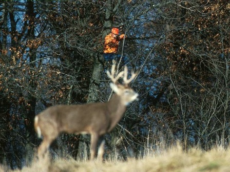 Resultado de imagen para La caza de venados